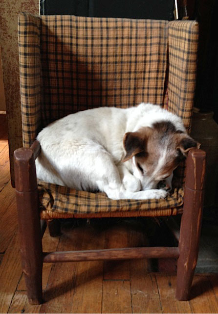 Annie, at 17 1/2, napping in her favorite chair
